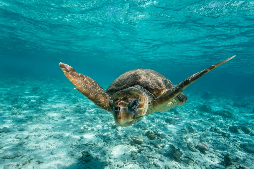 Caretta-Caretta-turtle-zakynthos-greece
